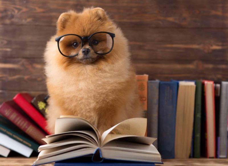 Fir en Hund zu Lëtzebuerg ze hunn: Wéi Formalitéiten?