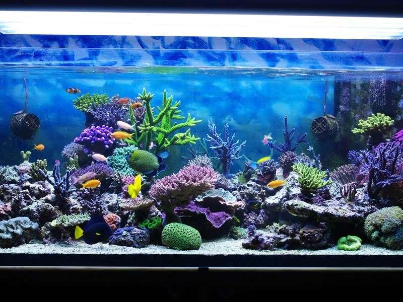 Tipps fir en Aquarium ze botzen