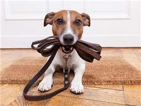 Faut-il prendre une assurance pour son animal de compagnie ?