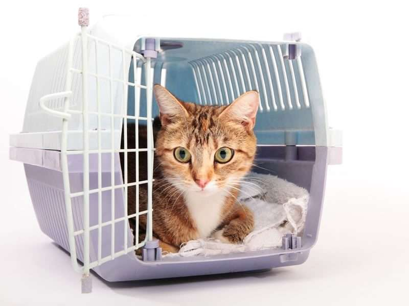 Tips to take your cat to the vet