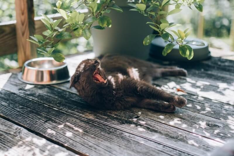 10 tips to protect your pet from heat