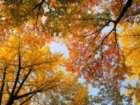 Jardinage en novembre : conseils et travaux à réaliser