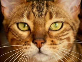 10 things to know about your cat's whiskers