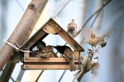 Take care of birds in winter