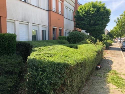 Elagage de buissons et haies