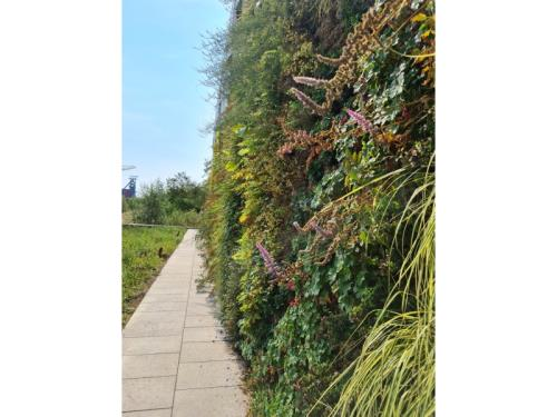 Murs végétaux et toitures vertes