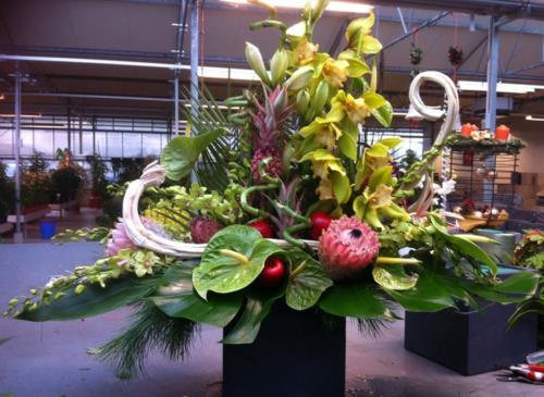 Compositions de plantes