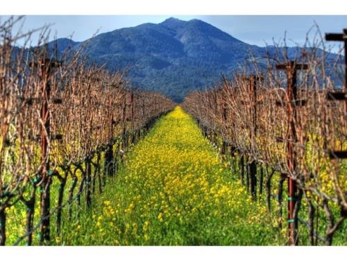 Qu'est-ce que l'agriculture Biodynamique?
