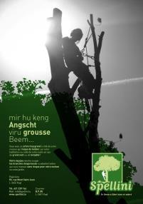 Elagage et abattage d'arbres.