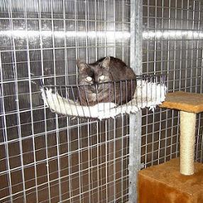 Cage intérieure pour chats