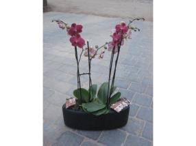 Plante d'interieur